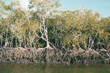 Picture of / about 'Endeavour River' Queensland - Endeavour River