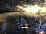 Picture relating to Cardinia Creek - titled 'Cardinia Creek'